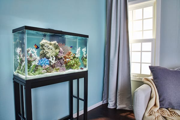 Where to Place Fish Tank in Home?