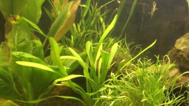 Why Are My Aquarium Plants Turning Yellow?