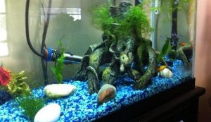 Why is My Aquarium Heater Not Working?