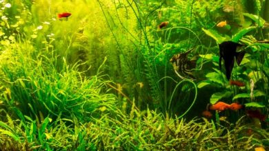Can Aquarium Plants Live in Brackish Water?
