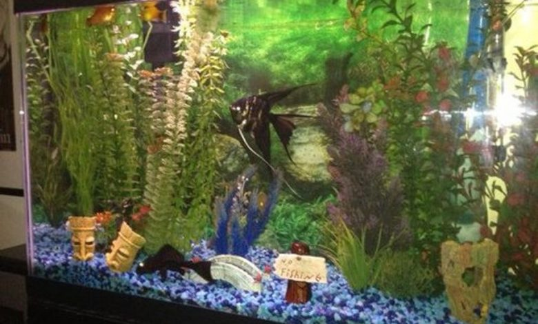 Can Fish Tanks Cause Mold?