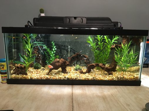 How Long Can You Leave a Fish Tank Filter Off?