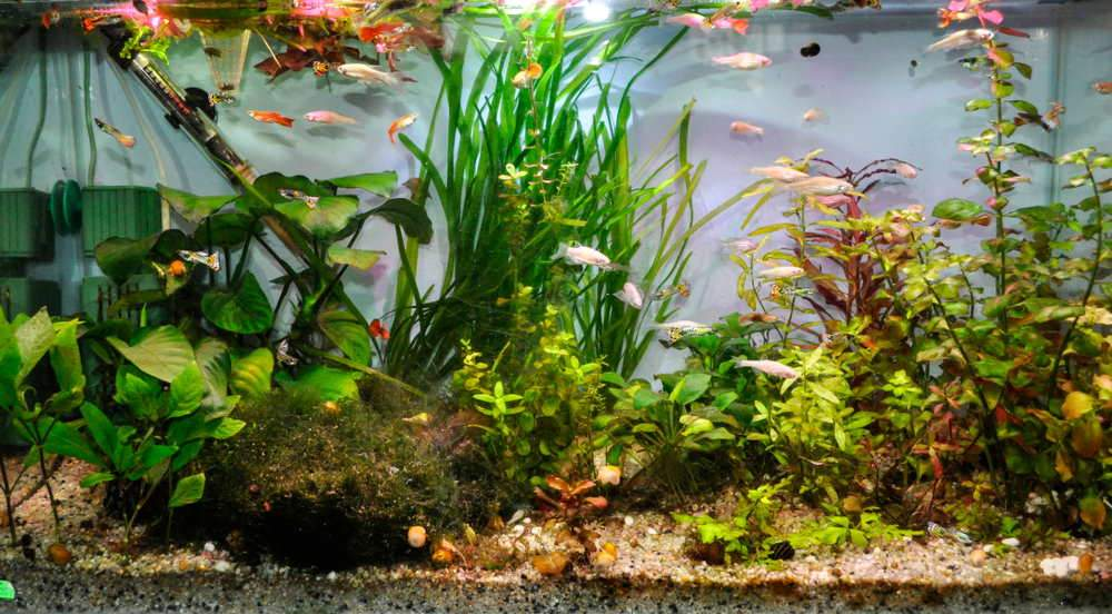 How Much Does a Fish Tank Heater Cost?