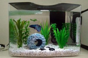 How Much Electricity Does Fish Tank Filter Use?