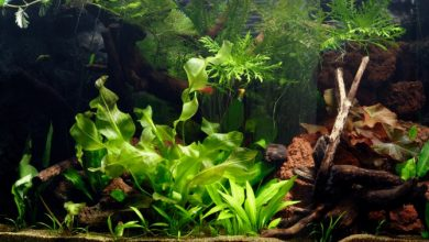 How to Catch Fish in a Planted Aquarium?