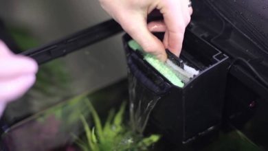 How to Change Filter Cartridge in Fish Tank?