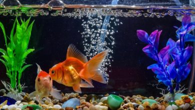 How to Make a Fish Tank Filter Less Powerful?