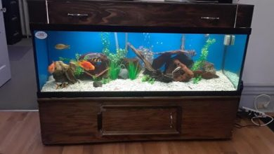 How to Move a Fish Tank Without Emptying It?
