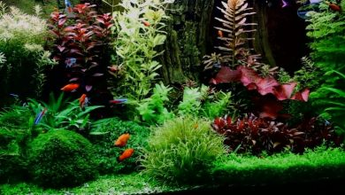 What is Aquarium Plant Food?