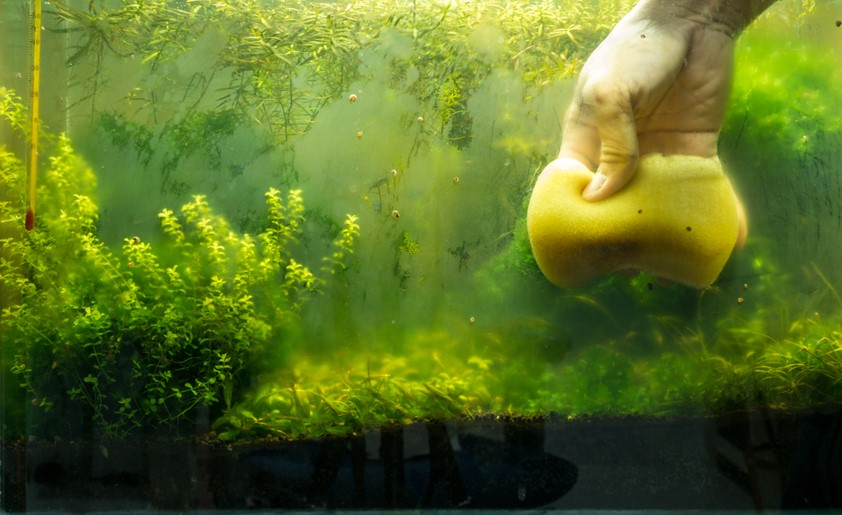 Why Does My Fish Tank Turn Green So Fast?