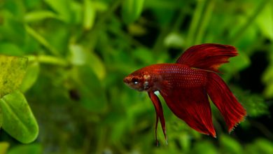 Do Fish Close Their Eyes When They Sleep?