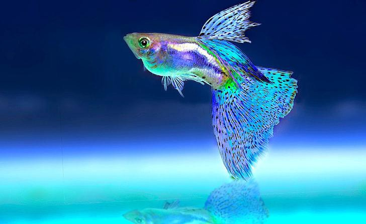 Do Fish Lay Eggs or Give Birth?