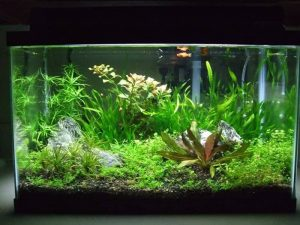 How Much Does a Fish Tank Weigh?