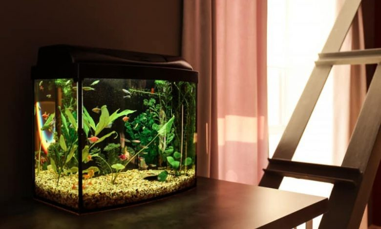 How to Protect Fish Tank From Sunlight?