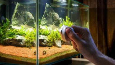 How to keep a fish tank clean without a filter?