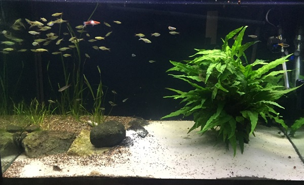 Introducing New Fish to Old Fish