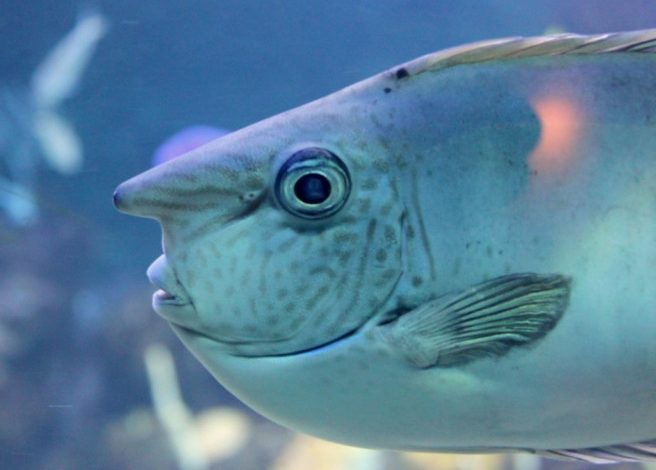 Do Fish Have a Nose