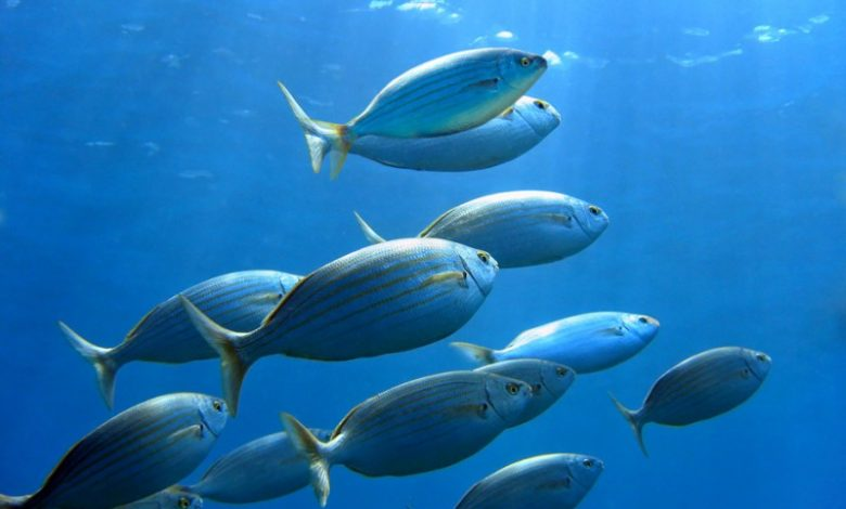 Why Do Fish Have Boat Like Shape?