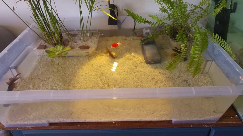 Can You Keep Fish in a Plastic Tub?