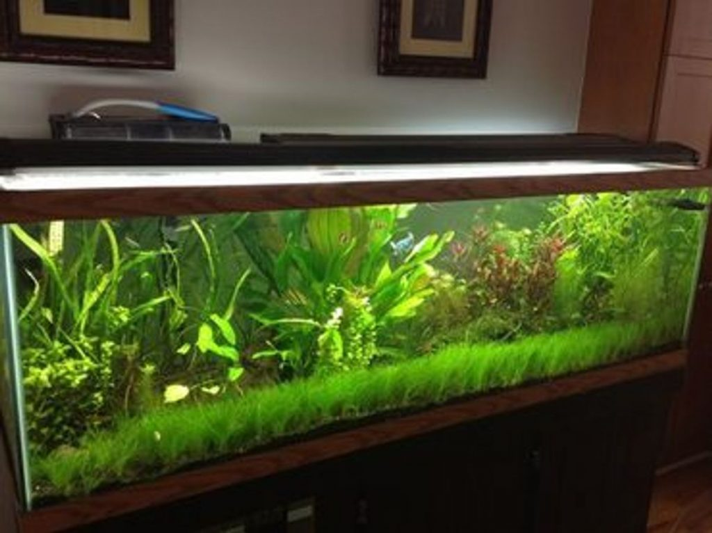 How Long to Keep Aquarium Lights on For Plants?