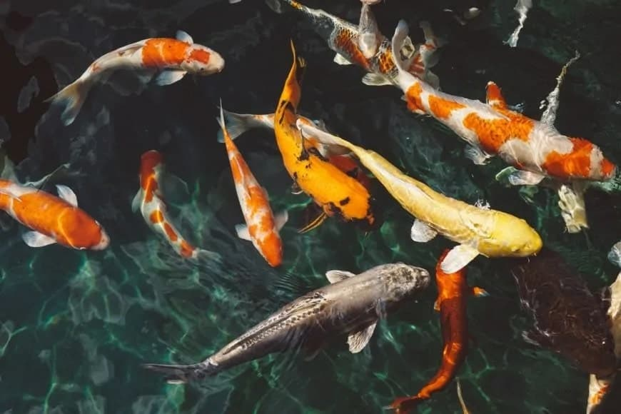 Why are Saltwater Fish More Colorful Than Freshwater?