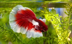 Can You Use Spring Water in a Fish Tank?