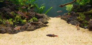 Can You Add Sand to an Aquarium with Fish in it?